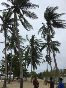 セブ島Daanbantayanホテルのヤシの木