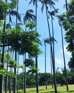 墾丁(ケンティン)国家森林公園の木