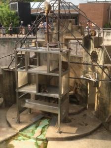 京都市動物園の猿