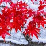 12月の京都イメージ