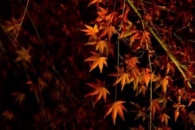 京都紅葉名所