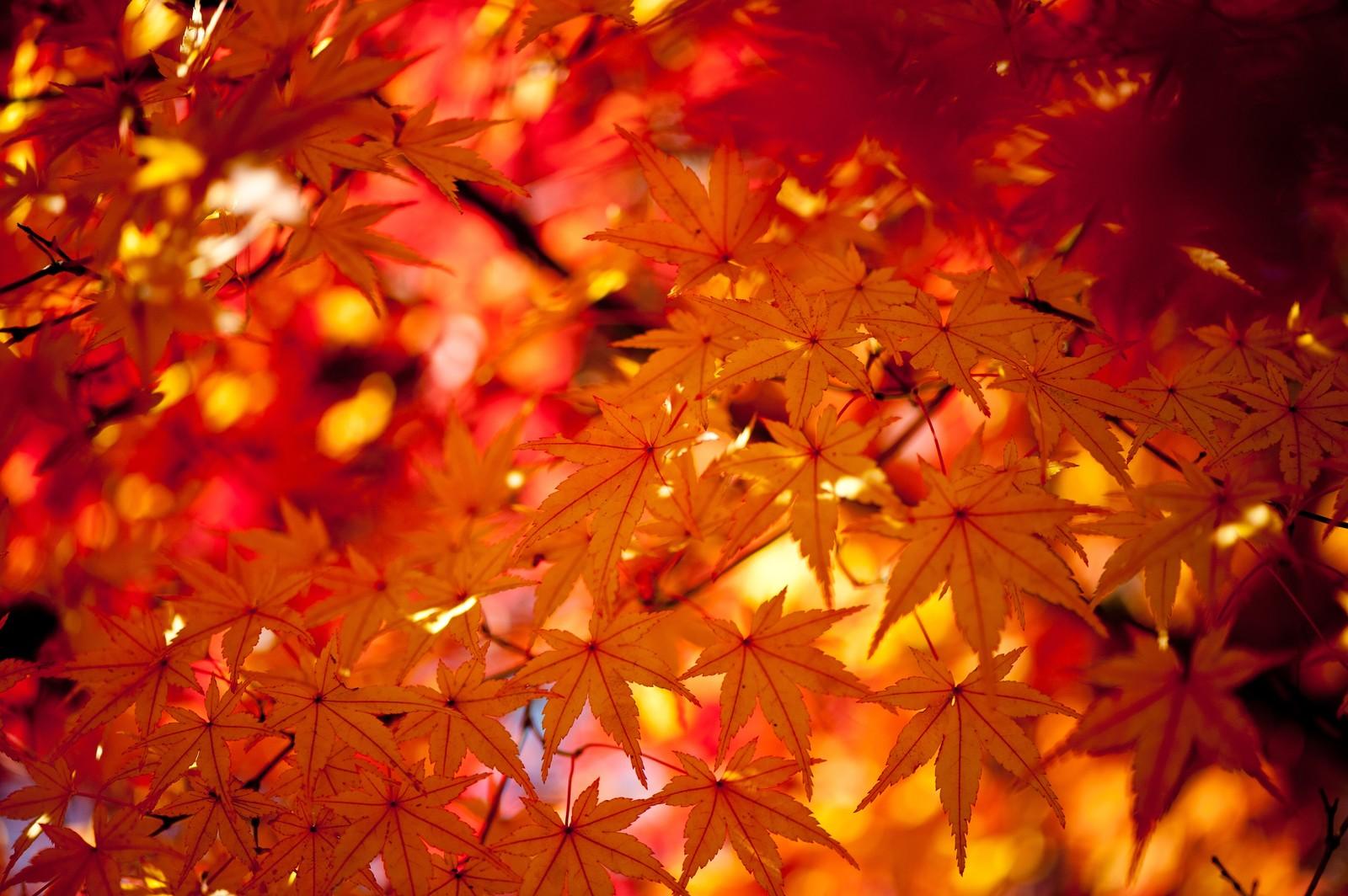 秋の京都紅葉イメージ