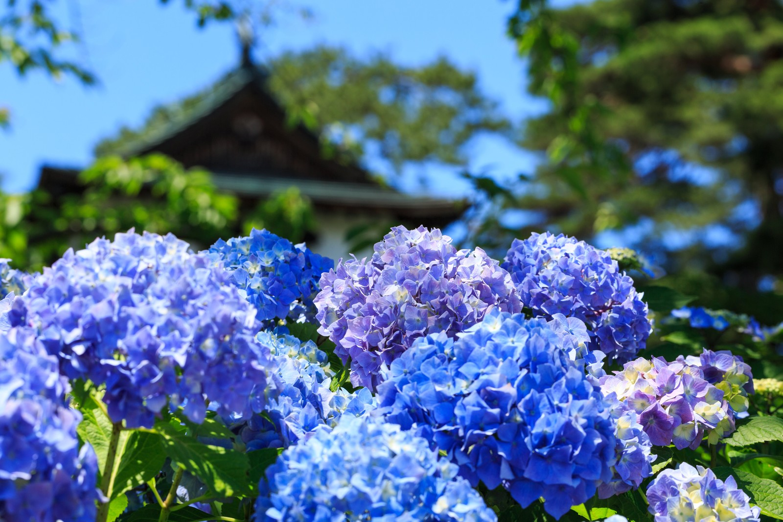 6月京都観光のイメージ