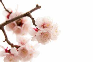 2月に京都を観光するイメージ