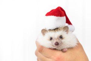 クリスマス子供のコスプレ