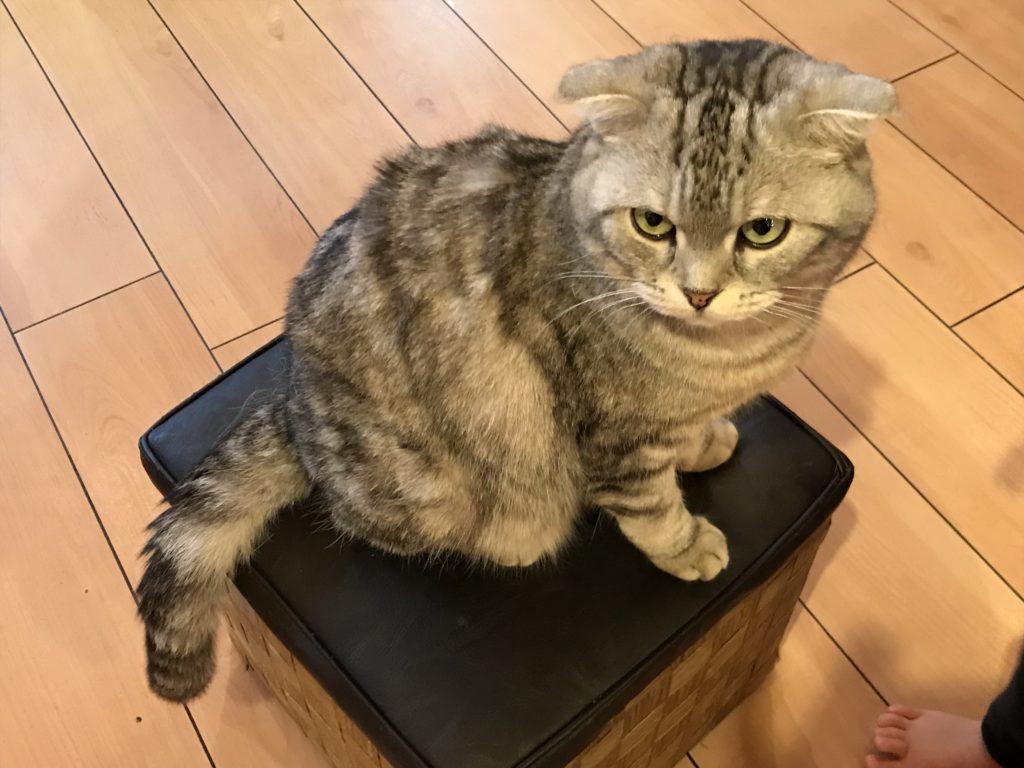 犬猫人京都カフェ